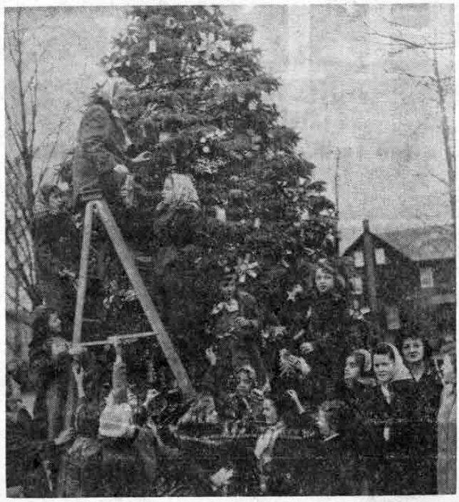 Intermediate and Brownie Scouts of the St. Thomas of Villanova and Rosemont schools are shown working together in the spirit of Christmas and Scouting, as they trim the Rosemont community tree with decorations made in troop meetings. (Photo by Elmer Addison)